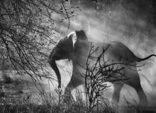 Сальгадо Слон