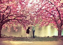 spring-blossom-love-kiss